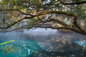 Florida Springs, Fern Hammock, Photo by David Moynahan