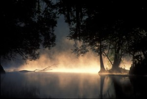 Cold Morning, Ginnie Springs Photo by Wes Skiles