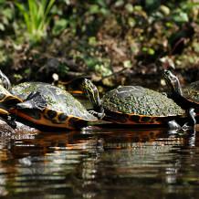 Rainbow Ssprigs Turtles-s