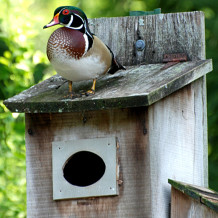 Wood Duck Box Project