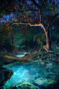 oasis in the dark.SEv2.xl