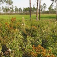 Juniper Prairie