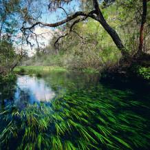ichetucknee sacred river.moran.sRGB