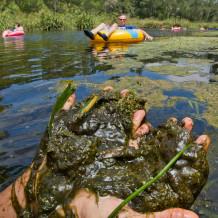 ich algae hands 2011.moran.sRGB