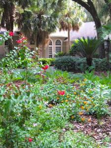 A native garden replaces a lawn.